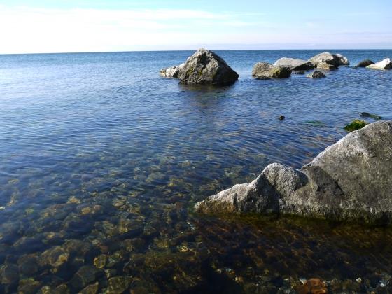 В России введён новый вид квот на добычу водных биоресурсов