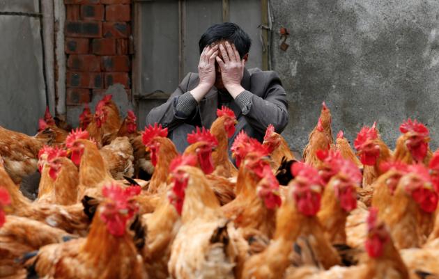 Китайские власти: птичий грипп мутировал и стал опасней