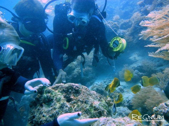 Бережное отношение к подводной флоре и фауне