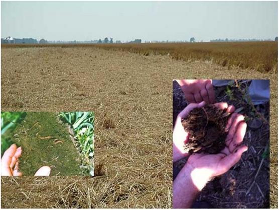Рис. 4. Восстановление почвы — появление дождевых червей