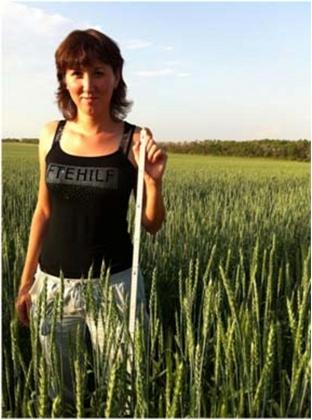Рис. 25. Развитие яровой пшеницы в засуху 2012 года. Широкорядные посевы в Челябинской области