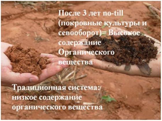Рис. 1. Выздоровление почвы — главный эффект Нулевой технологии