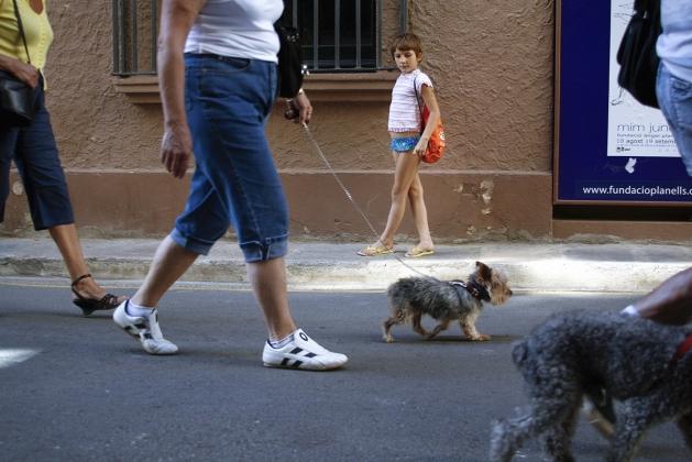 Испанские дамы с собачками