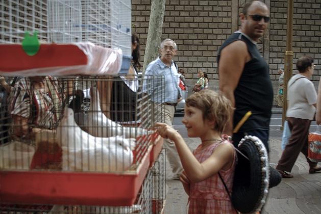 Птичий рынок на улице Барселоны