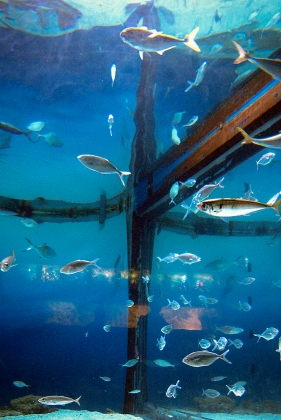 Жители знаменитого Аквариума Барселоны (L'Aquarium de Barcelona)