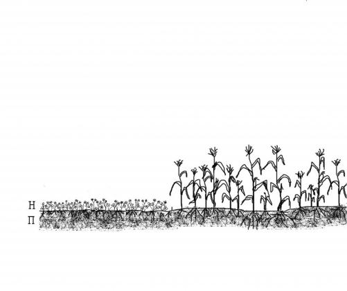 Рис. 2б. Двухярусная структура аграрной экосистемы