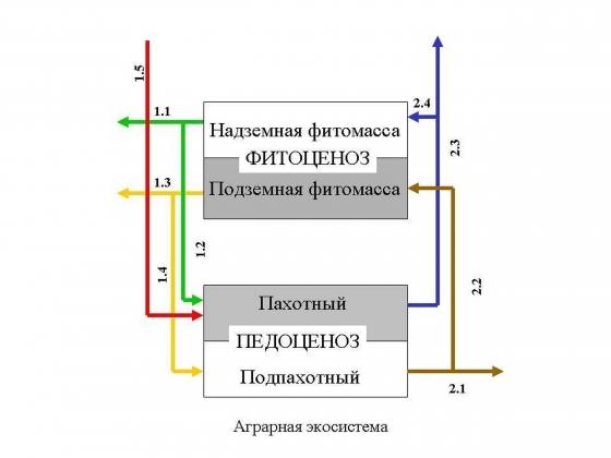 Рис. 3. Структура и функция аграрной экосистемы