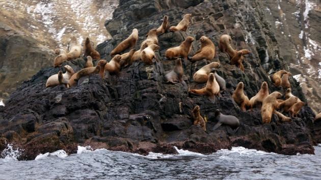 Остров Монерон — лежбище морских котиков
