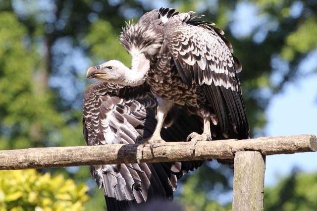 В Южной Дакоте 15 человек судят за торговлю перьями орлов