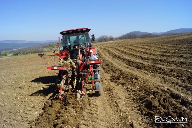 Посадка виноградников: рождение лозы в крымской Балаклаве