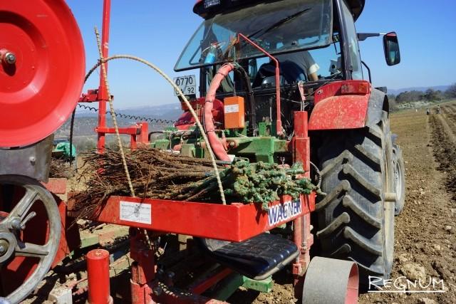 Саженцы загружены в лоток трактора