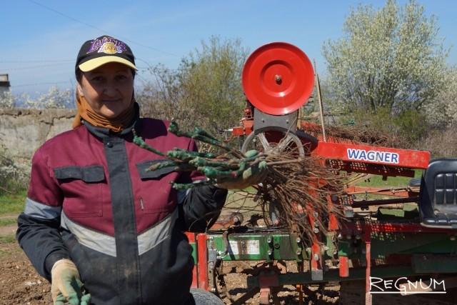 Работа виноградаря — сложная, круглый год и на ветру и под палящим южным солнцем