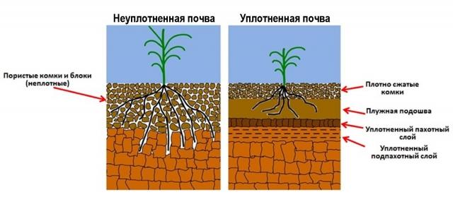 Уплотнение почв против органического земледелия
