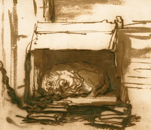 В черте Мурманска обнаружено захоронение бездомных собак