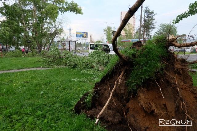Власти Москвы выплатят по 1 млн рублей семьям погибших от урагана