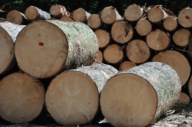В Костромской области построят два лесоперерабатывающих комплекса