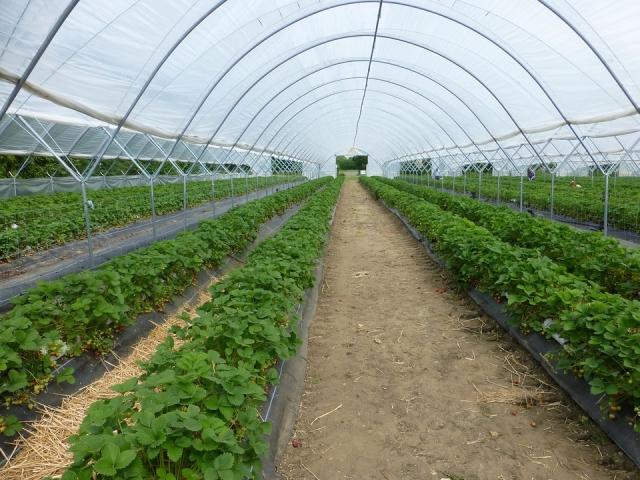 Липецкая область стала лидером ЦФО по выращиванию тепличных овощей