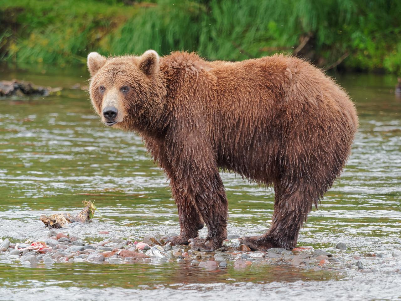 Сонные медведи фото самоварах поначалу