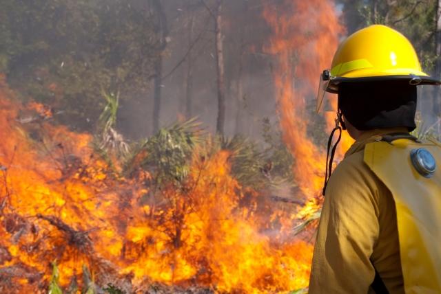 Си Цзиньпин выразил соболезнования главе Португалии в связи с пожарами