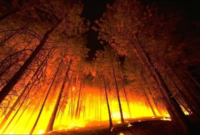В Бурятии начались увольнения из-за лесных пожаров
