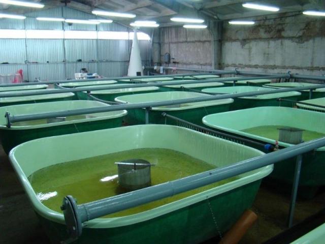 Три месяца выращивали мальков стерляди в рыбопитомнике Духовницкое