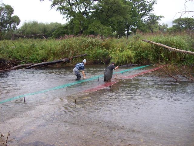 На дальневосточные гектары на Камчатке позарились браконьеры