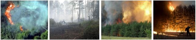 Рис 3. Лесные пожары лета 2010 г.в Москвоской (а, б), Воронежской (в) и Рязанской (г) областях