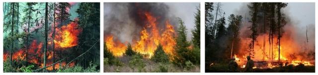Рис. 16. Лесные пожары в Приамурье весна 2016 г