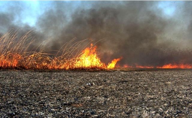 Рис. 32. Март 2011 г. Пожар в Астраханском биосферном заповеднике.