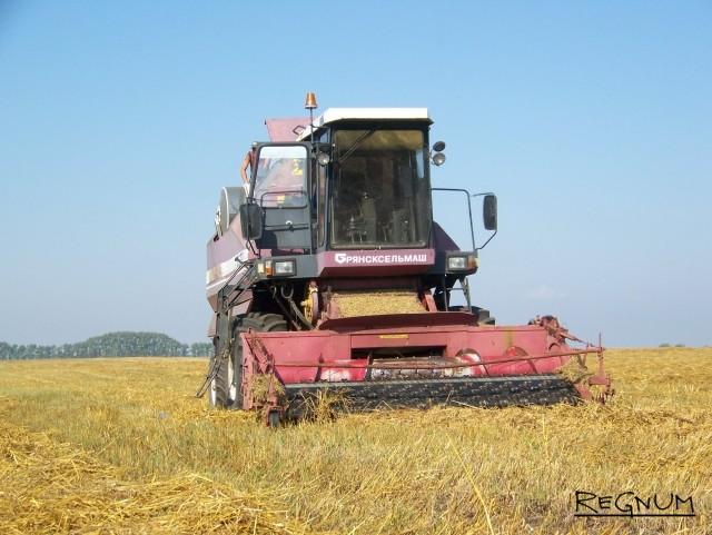 На Алтае из-за «тропического климата» и сильного ветра полёг хлеб
