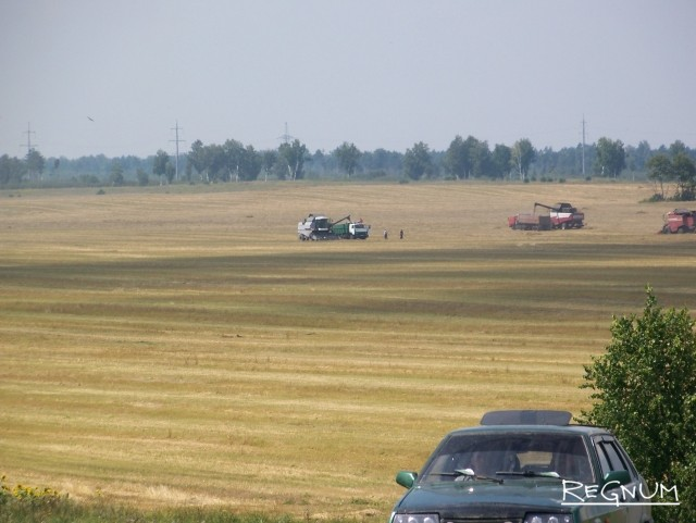 Уборочная страда в Алтайском крае