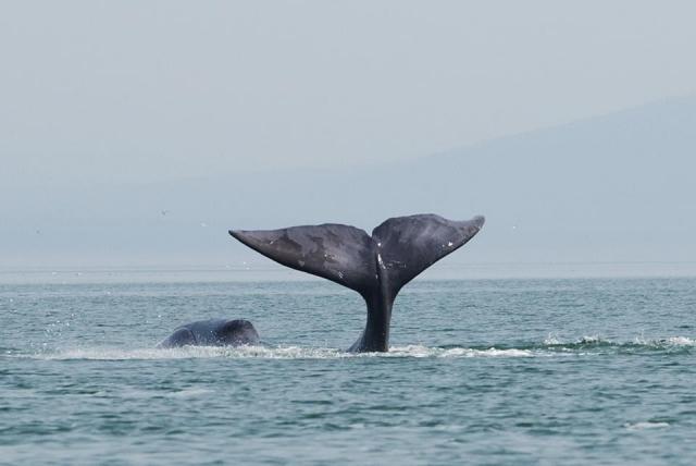 В Хабаровском крае спасли севшего на мель кита