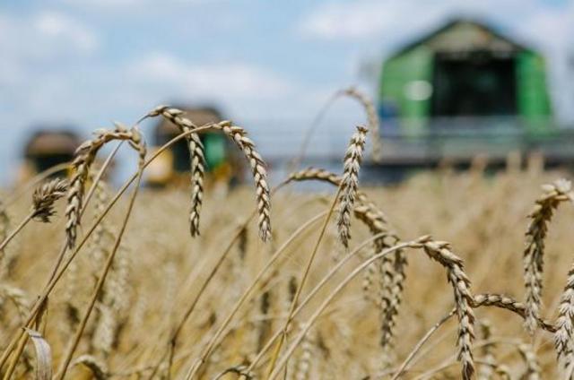 Непуганый урожай: капризы погоды сыграли на руку аграриям