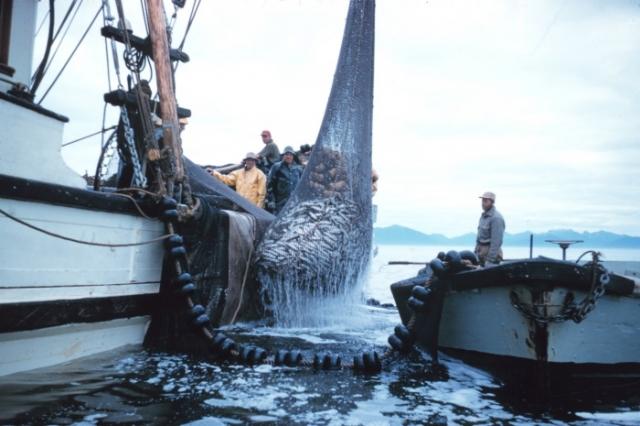 Добыча рыбы в Арктике