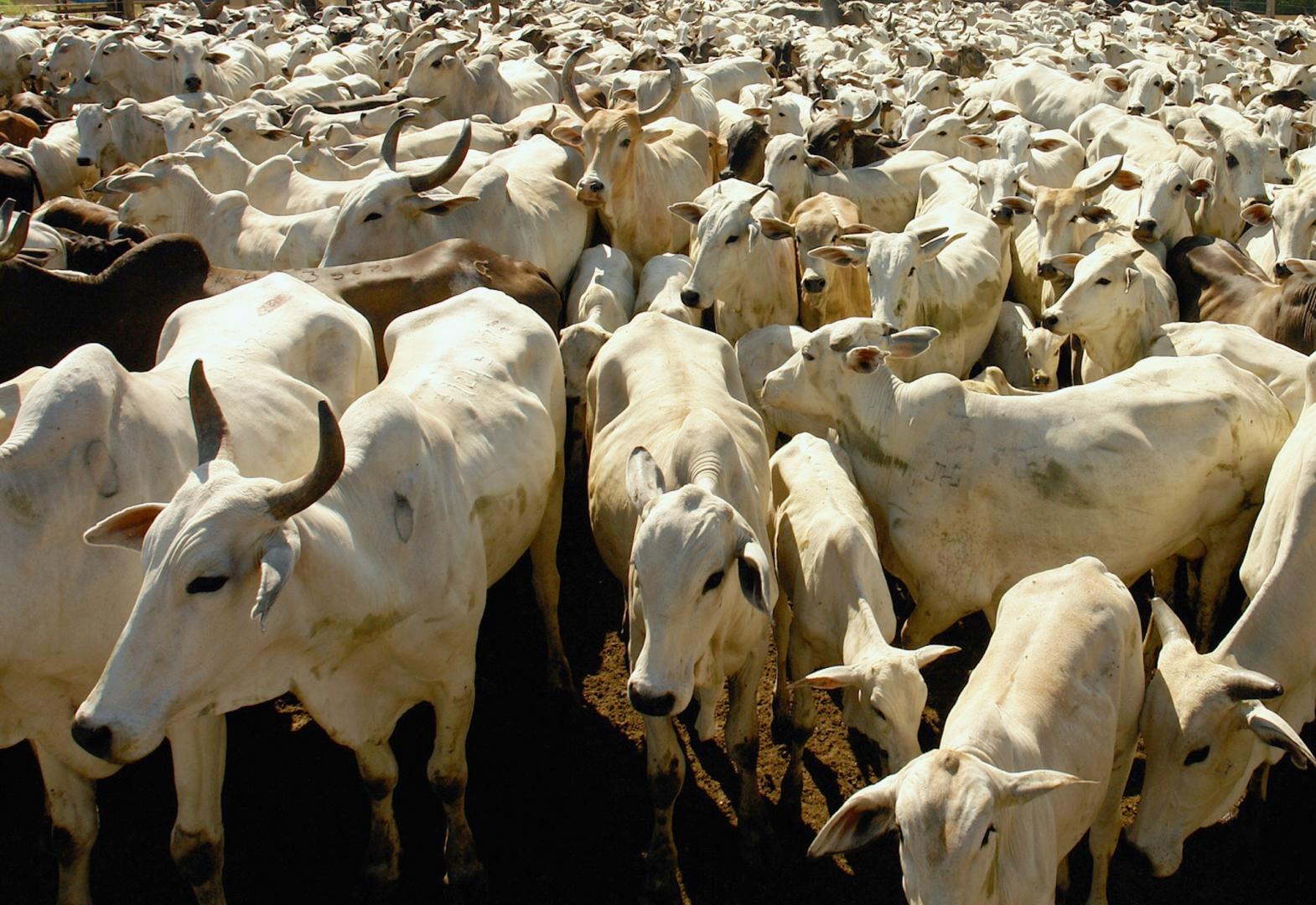 подумать, стадо коров картинка англии мечтают