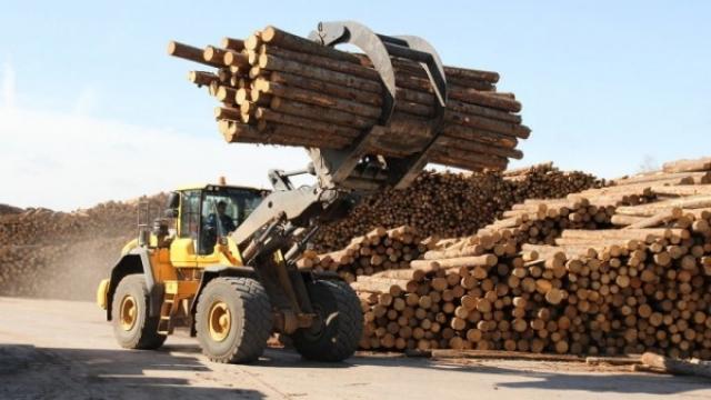 Поморье продолжит развивать лесную отрасль.