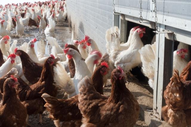 Бизнесмены с Ближнего Востока могут стать инвесторами птицефабрики в ЛНР