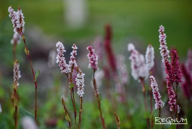 Цветы в парке «Зарядье»