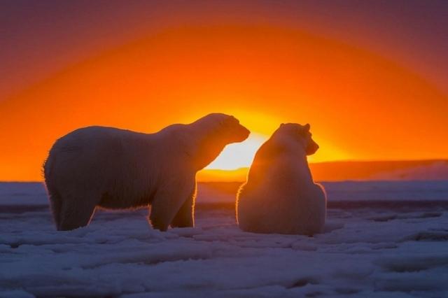 Арктика: Китай обманул Канаду, а США пора проснуться