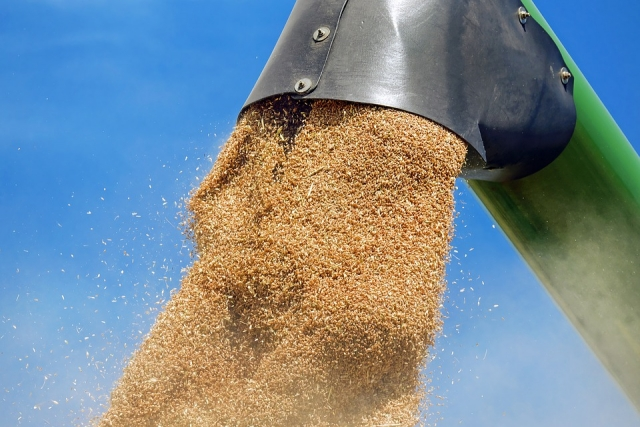Омских аграриев просят «попридержать» реализацию зерна