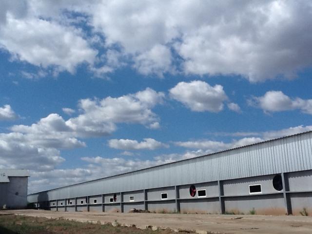 Свинство в Оренбуржье: дело в отношении фермы предлагают «замять»