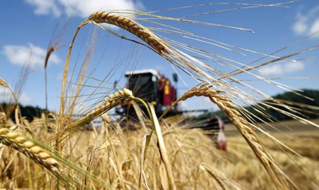 Уборочная кампания в Красноярском крае: аграрии продолжают биться за урожай