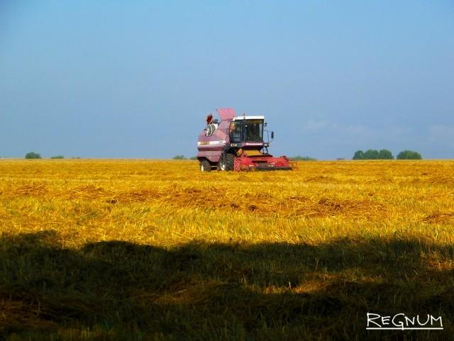 Что происходит: Рекордный урожай — или кризис перепроизводства?