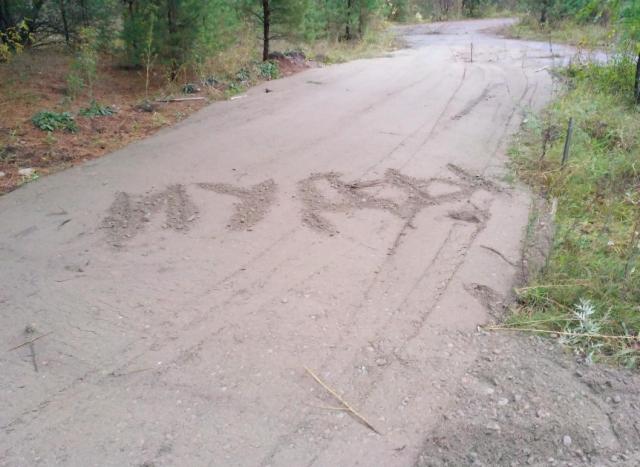 Слово, написанное защитниками байского леса, после того, как трассы для лыжероллеров были все-таки проложены и сломаны посадки