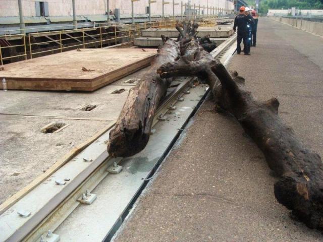 Из Чебоксарского водохранилища отправили на переработку 38 фур с топляком