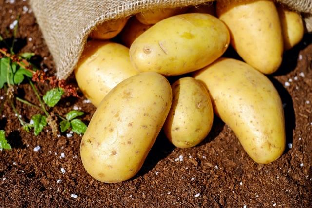 В Ярославской области урожай картофеля и зерновых упал на 10%