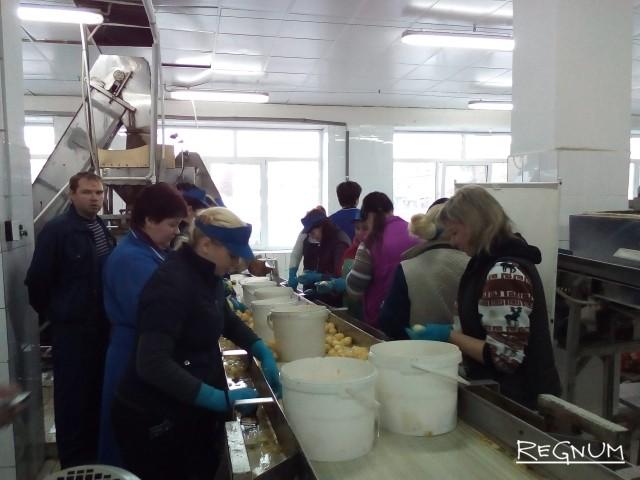Социальную сферу Ярославля ждет «пищевой ЕИРЦ»