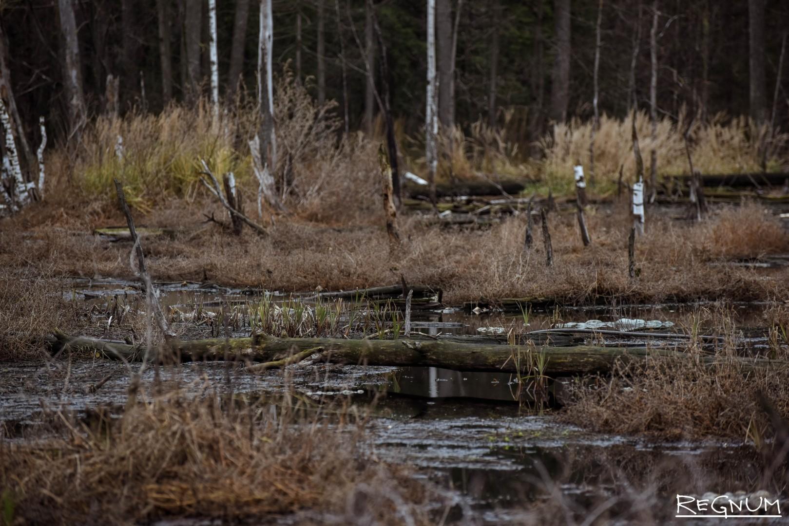 Чем-то напоминает Дартмурские болота