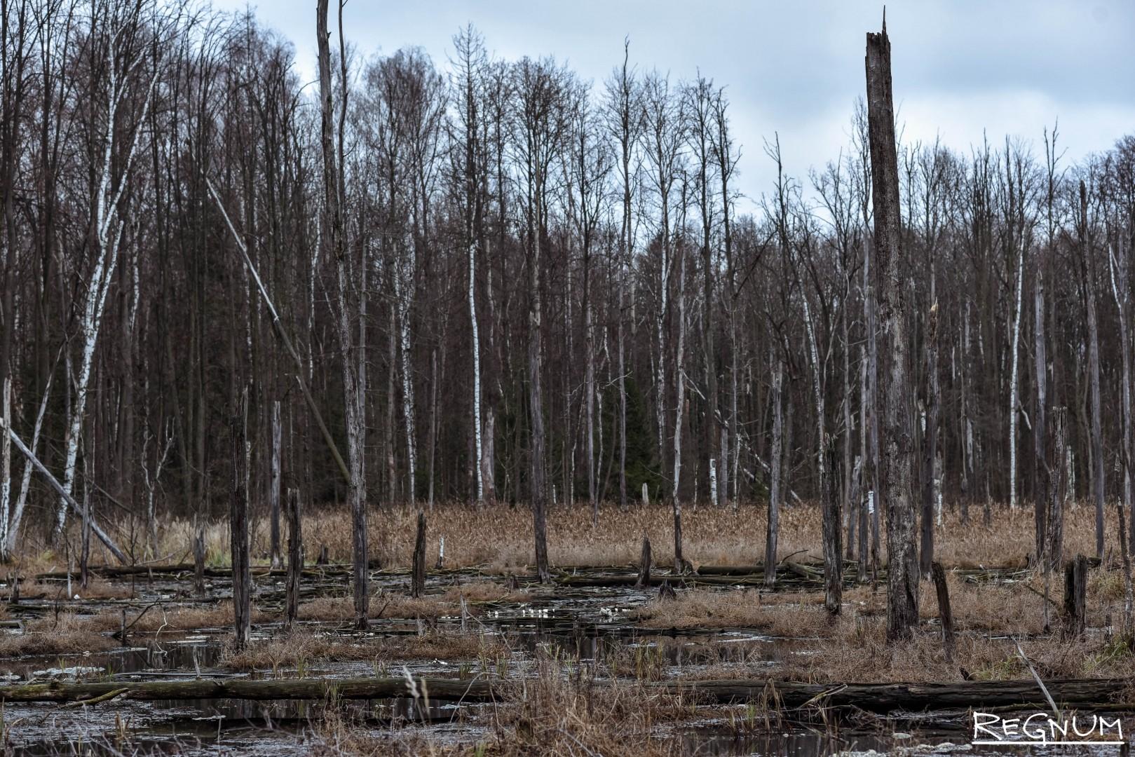 Раньше здесь был лес