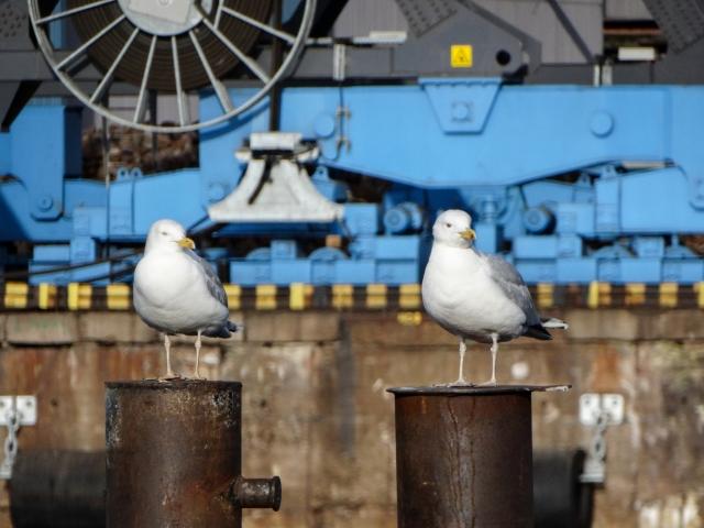 Чайки в порту